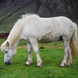Reiturlaub in Island