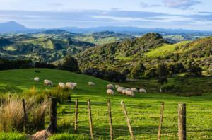 Mit einem Wohnmobil lässt sich ideal durch Neuseeland reisen