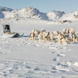 Meine Hundeschlittenfahrt durch Grönland