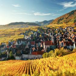 Elsässische Weinberge vor einer Kleinstadt im Herbst