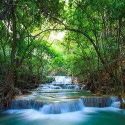 Dschungel Thailand