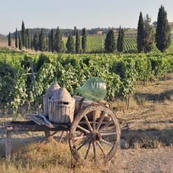 Eine Reise in die Toskana lohnt sich immer!